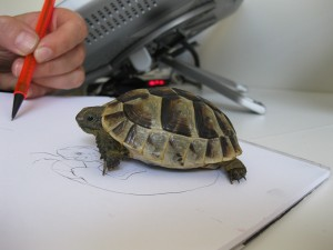 tortoises2