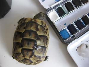 tortoises3