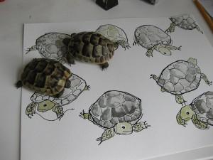 tortoises5