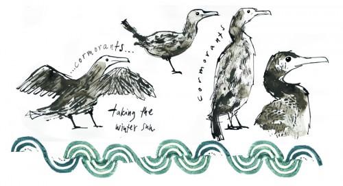 cormorants_jane_porter